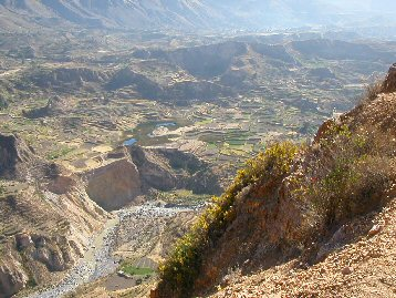 Terraces at Colca Canyon, Peru